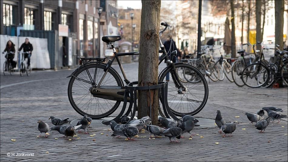 patattepatat, patat, patatte patat, patat op straat, duiven, onderuit gaan, op je muil gaan, op je bek gaan, dronken op de fiets, aangeschoten op de fiets, opsteken in de kroeg