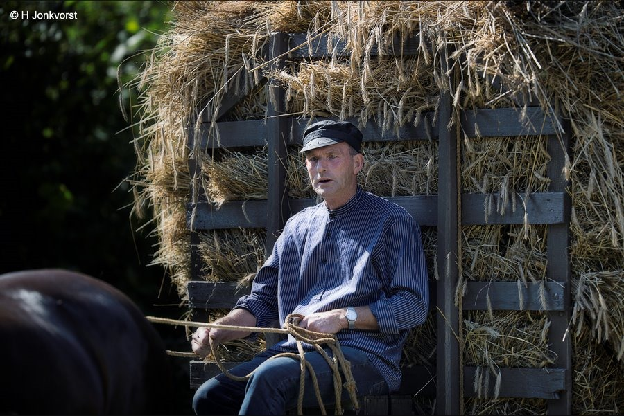 Staphorst, Staphorstdagen, Staphorstdagen 2017, Rogge oogst, met paard en wagen
