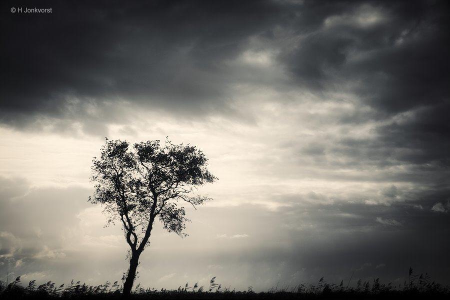 De olde Maten, natuurgebied De Olde Maten, Eenzame boom, Leeg landschap, Dreigende Lucht, Dreigende Wolken, desolaat, Desolaat Landschap, leegte in een landschap, Landschap, Natuur, Staphorst, Rouveen