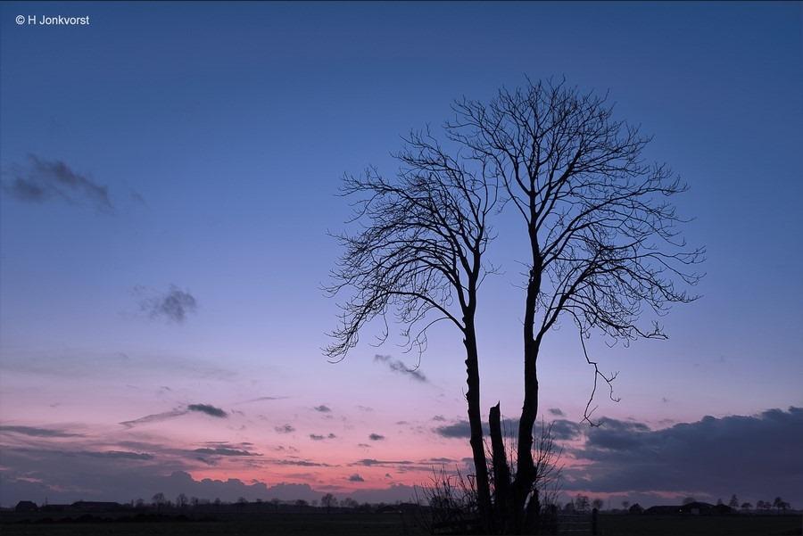 twee eenheid, twee-eenheid, bijzondere boom, bijzondere bomen, bijzondere groei, boomgroei, Staphorsterveld, Staphorst, landschap, Landschapsfotografie