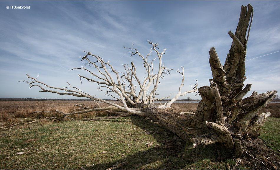 afgestorven, Afgestorven boom, afgestorven bomen, dode boom, dode natuur, Doods Landschap, Desolaat Landschap, desolaat, Dwingelderveld, Nationaal Park Dwingelderveld, natuur, landschap, Fotografie, Foto, Photo