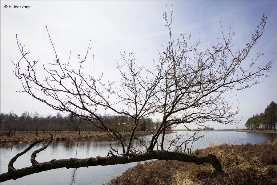 Niet kapot te krijgen, grillige natuur, grillige bomen, bijzondere groeivorm, bijzondere groeivormen, Grillige Vormen in de Natuur, Dwingelderveld, Landschap, Natuur, Nationaal Park Dwingelderveld, Natuur in Drenthe