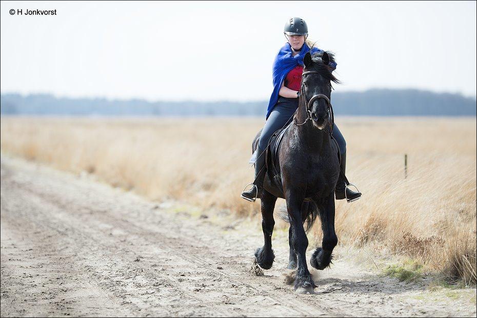 Op een draf, ritje te paard, paardenrit, Dwingelderveld, Dwingelderheide, prairie, Nationaal Park Dwingelderveld, paard en ruiter, amazone, Landschap, Fotografie, Foto Photo, Canon EF 200mm f2L IS USM