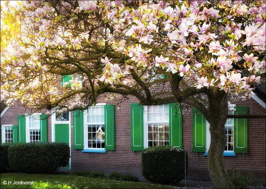 Staphorst in bloei, Staphorst in bloesem, Bloesemboerderij, Staphorst, Staphorster boerderij, Bloesem, Voorjaarsbloesem Fotografie, Foto
