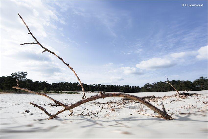 Droogte in Nederland, Extreme Droogte, Desolaat Landschap, Uitgedroogd Landschap, Sahara, Sahara Ommen, Zandverstuiving, Zandvlakte, waterschaarste Nederland, Woestijnen rukken op, Landschap, Natuur, Fotografie, Foto