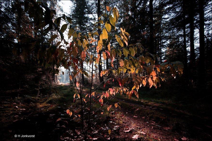 50 tinten herfst, 50 tinten, Bospad, Staphorst, Zwarte Dennen, Staphorster bos, Herfstlicht, Herfstkleuren, Herfsttinten, Herfstsfeer, Herfstsfeer in de natuur, Herfst in de natuur, Landschap, Natuur, Fotografie, Foto