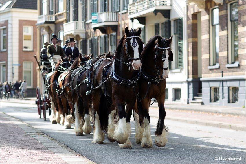 Achtspan Shires, 8 Span Shires, Wouter Hazeleger, 8 span paarden, Bokbierdag Zutphen 2018, Bokbierdag Zutphen, Bokbierdag, Koetsenoptocht, Koetsentocht Fotografie, Foto