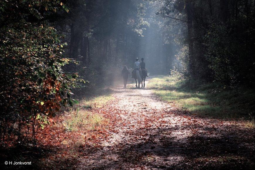 Bospad, Staphorst, Zwarte Dennen, Staphorster bos, Herfstlicht, Herfstkleuren, Herfsttinten, Herfstsfeer, Herfstsfeer in de natuur, Herfst in de natuur, Landschap, Natuur, Fotografie, Foto