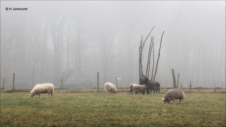 De goede herder, Openluchtmuseum Arnhem, Nederlands Openluchtmuseum, Openluchtmuseum Arnhem Winter, Nederlands Openluchtmuseum Arnhem, schaapherder, schapenhoeder, Canon eos R, Fotografie, Foto, een goede herder