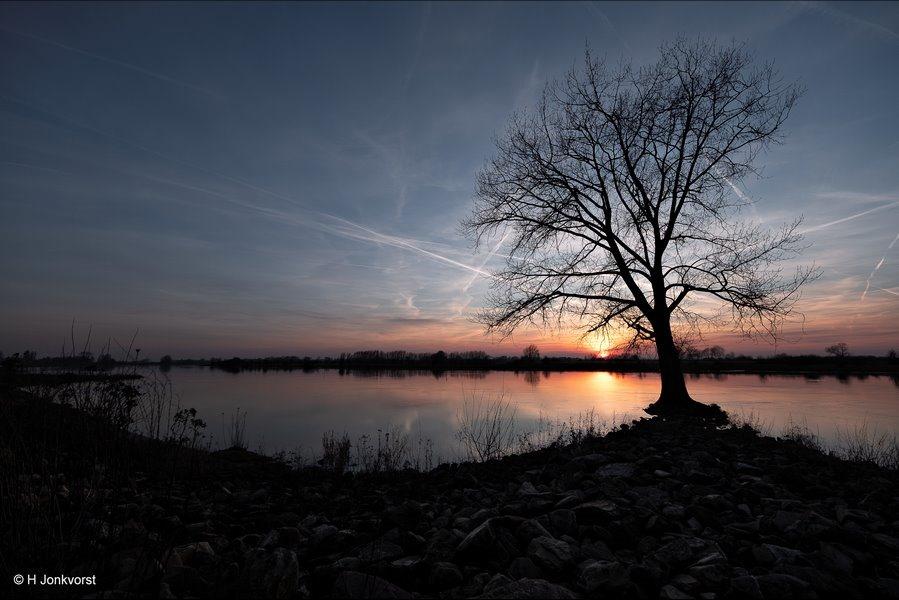boom, boom onder water, Wijhe, IJssel, strandlijn, ondergelopen, Landschap, Landschapsfotografie, Groothoekfotografie, Fujifilm XT2, Fujifilm XF 8-16mm f2.8 R LM WR, Fotografie, Foto
