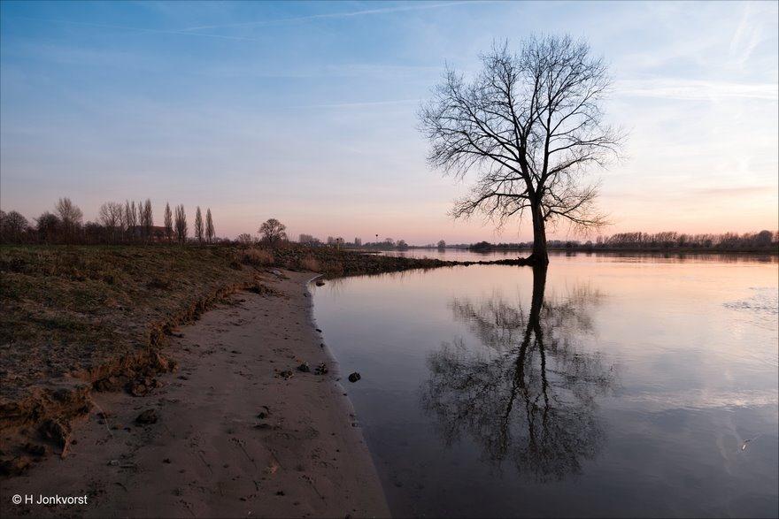 boom, boom onder water, Wijhe, IJssel, strandlijn, ondergelopen, Landschap, Landschapsfotografie, Groothoekfotografie, laag standpunt fotograferen, Fujifilm XT2, Fujifilm XF 8-16mm f2.8 R LM WR, Fotografie, Foto