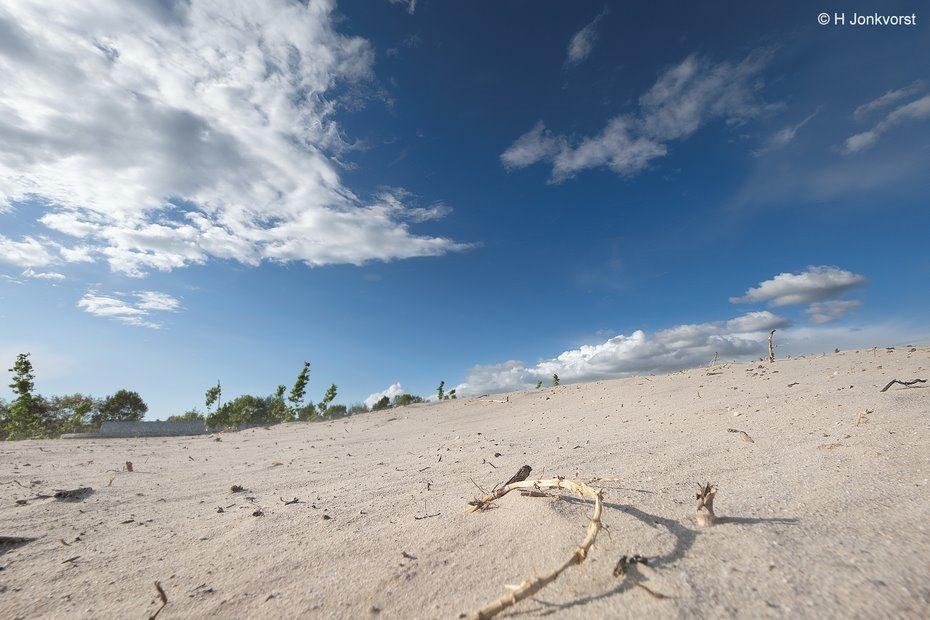 Sahara in Staphorst, Staphorst, Sahara, de woestijn rukt op, watertekort, zandvlakte, woestijnklimaat, droogte in Nederland, langdurige droogte, vervoer in de woestijn, kameel, Fujifilm XT2, Fujifilm XF 8-16mm f2.8 R LM WR