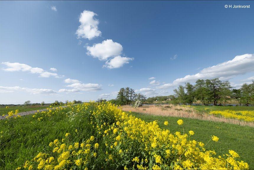 koolzaad, koolzaadveld, Brassica napus, Hasselt, Sluizerdijk, Landschap, Landschap Groothoek, Fujifilm XF 8-16mm f2.8 R LM WR, Fujifilm XT2, Fotografie, Foto, Photography, Photo
