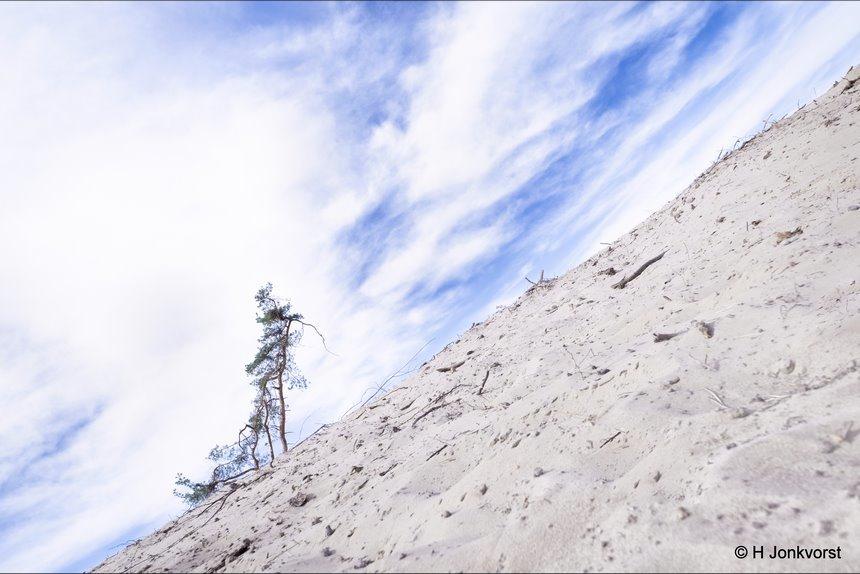 wandelende boom, walking tree, dor landschap, uitgedroogd landschap, stuifzandgebied, zandverstuiving, zandvlakte, Sahara, Sahara Ommen, woestijnlandschap, grondwater, Fujifilm XT2, Fujifilm XF 8-16mm f2.8 R LM WR