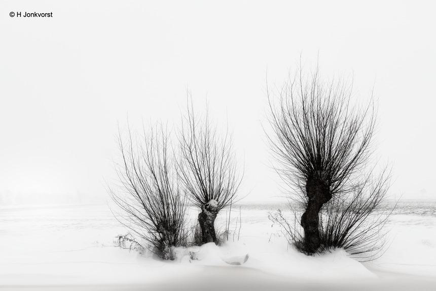 Knotwilg, knotwilgen, winters landschap, winter 2021, Staphorst, Staphorsterveld, minimalisme, minimalistisch, minimalistisch landschap, Fujifilm XT2, Fujifilm XF 16-55mm F2.8 R Lm Wr, Fotografie, Foto, Photography, Photo