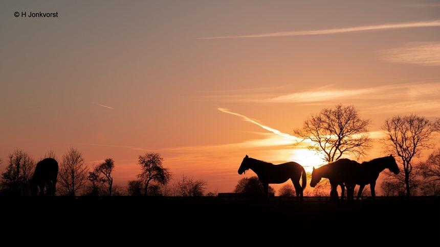 Staphorst, Berkenstouwe, zonsondergang, paarden, landschap, Staphorsterveld, sundown, verstilling, Fujifilm XT2, Fujifilm XF 16-55mm F2.8 R Lm Wr, Fotografie, Foto, Photography, Photo